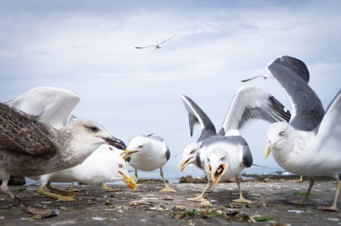 Coinslot - Devon birds