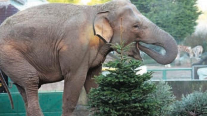 Barry's amusements, Belfast Zoo, christmas