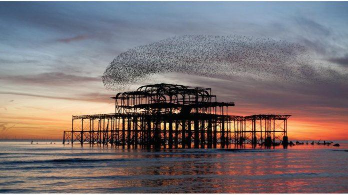 Pier network National Pier Society