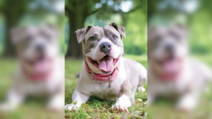 Admiral employee becomes viral sensation with dog